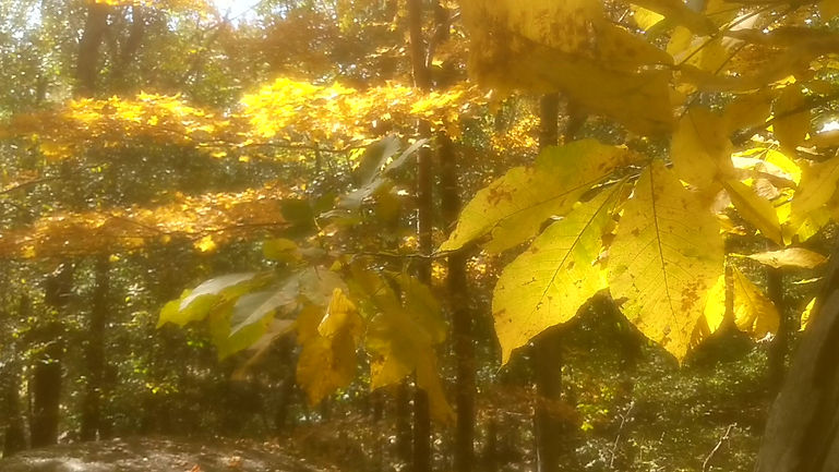 Harpscape #20: Autumn Leaves