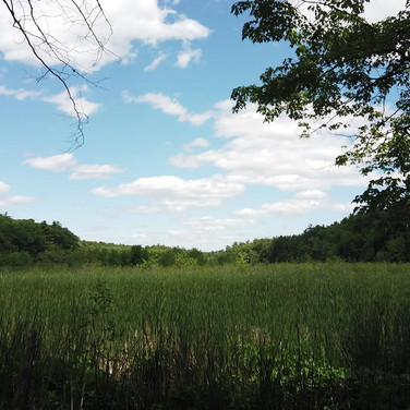 Harpscape #5: Springtime Meadow