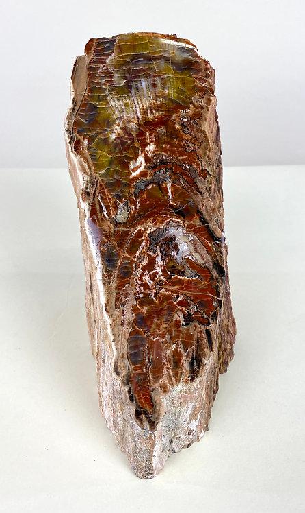 Petrified Wood Free Form
