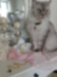 Katze, Lulu.jpg