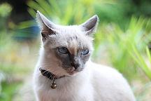 Katze Accessoires.jpg