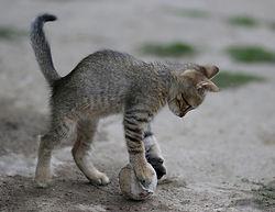 Katze mit Spielzeug.jpg