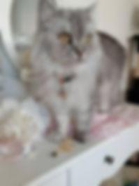 Schmuck für Katzen, Lulu.jpg