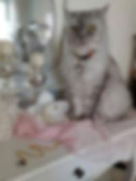 Katzenschmuck, Lulu.jpg