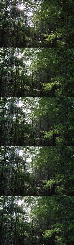 IMG_3724flarecombo.jpg