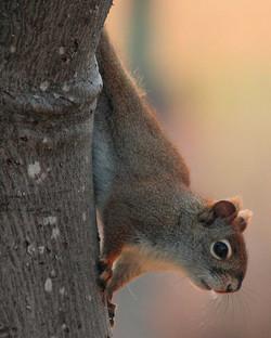 Squirrel Morning