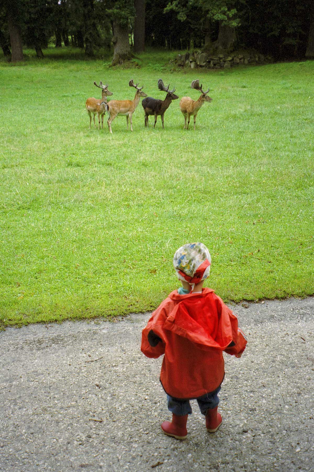Joana and the Deer