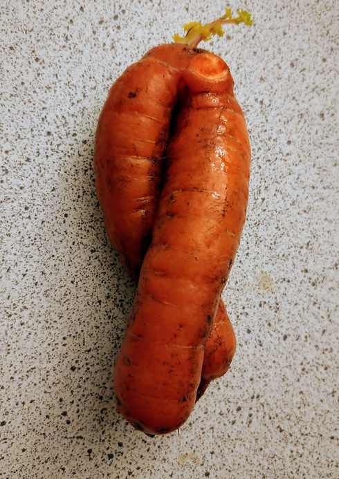 Cant wait carrot.jpg