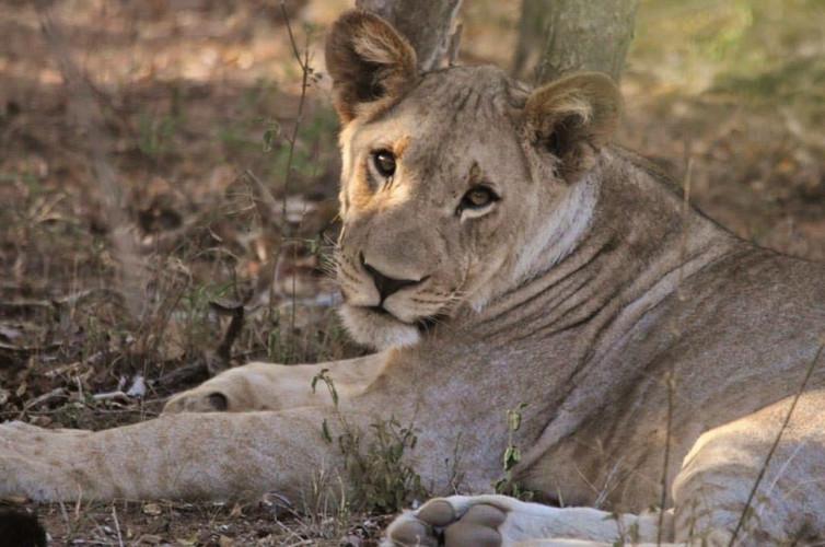 lion-cub-1024x679.jpg