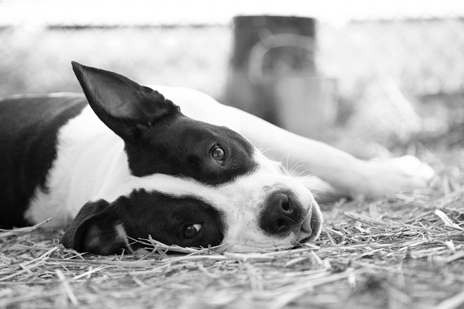 Alan Wlasuk Shelter Dog_MG_3687.jpg