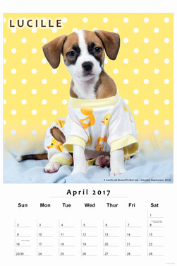 2017 Helping Paws Calendar