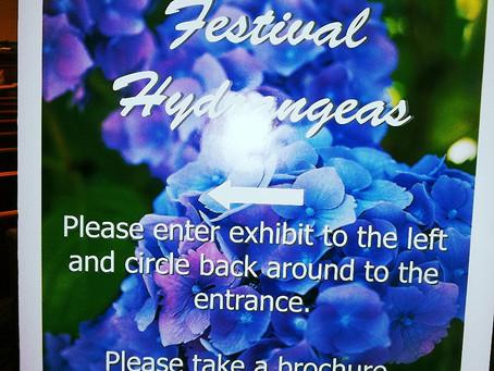 Hydrangea Festival 2016 - Free Garden and Arts Exhibits
