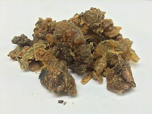 Commiphora myrrha - Myrrh