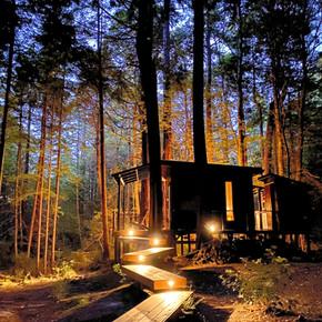 A Unique Tree Hut Getaway: The Elk Forest Retreat