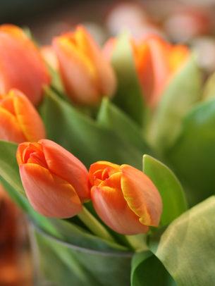 Irish Spring. Tulip bouquet