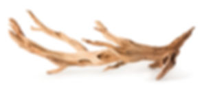 05513_Staghorn Wood_Manzanita Root_02.jp