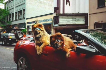 dogs cruising.jpg