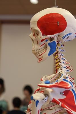 解剖学・運動学・生理学