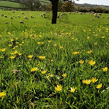 Falconry Experience Devon - Knight Farm