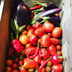 fresh vegetables from Knights farm