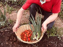 Care Farming, Soial care on a working farm
