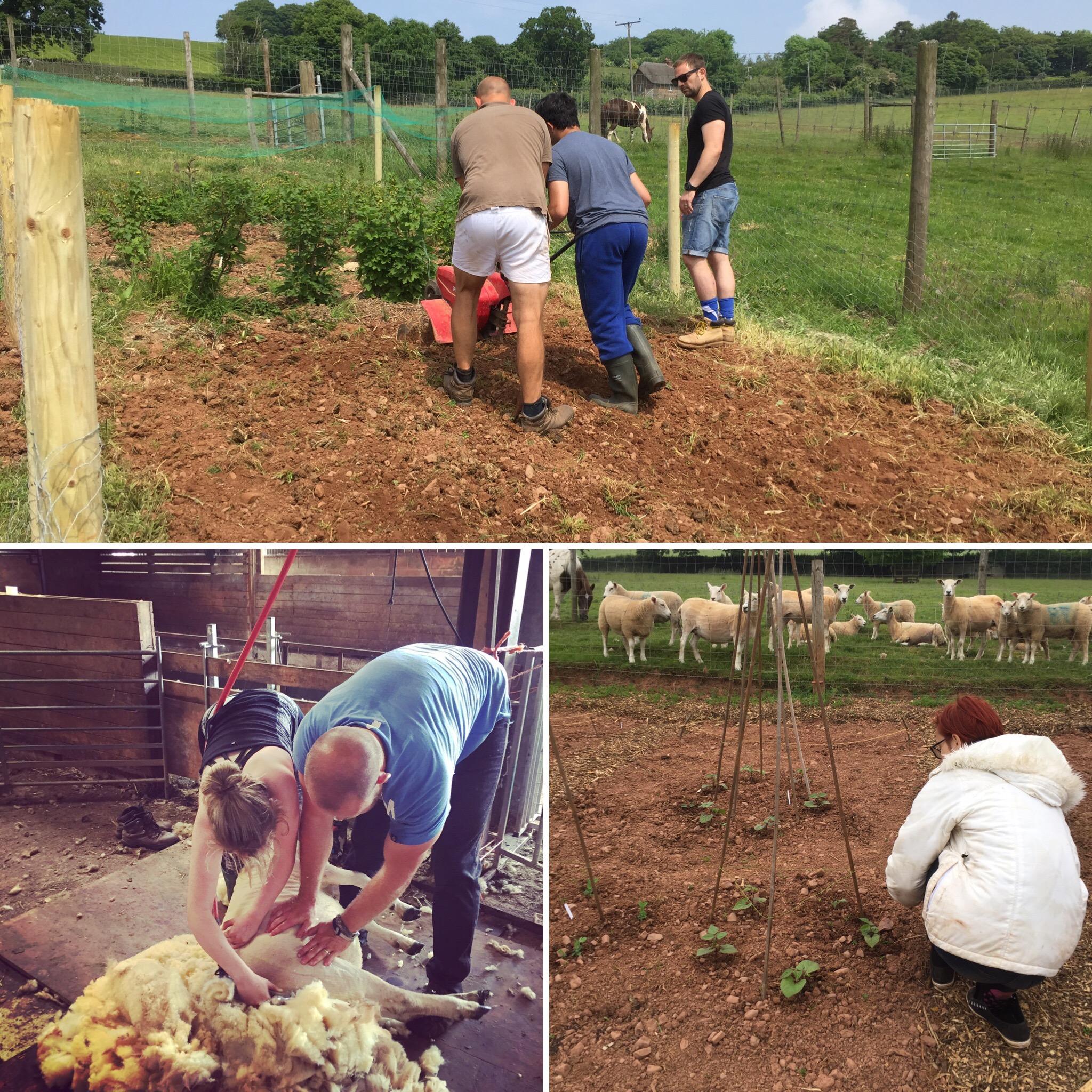 Care Farming