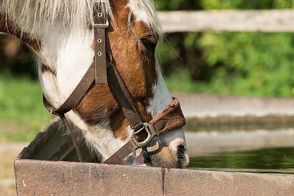horse-3442599_640.jpg