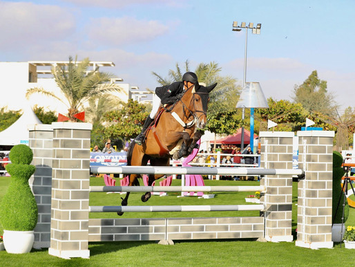 Amazing & Free Animal Activities on at the Sustainable City Horse Show