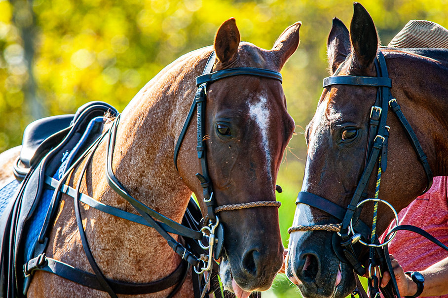 polo shot 3.jpg