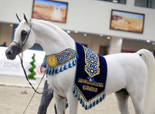 Launching Sharjah Equestrian Club and RacingSharjah Arab Jawad Festival Egyptian dynasty15-16 / Oc