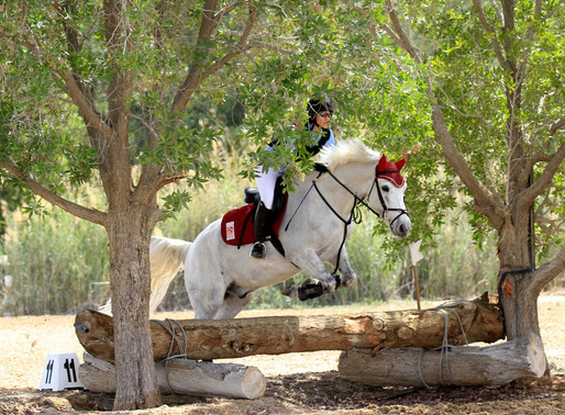 Eight Awesome Things to Do For Horse Owners and Lovers in the UAE