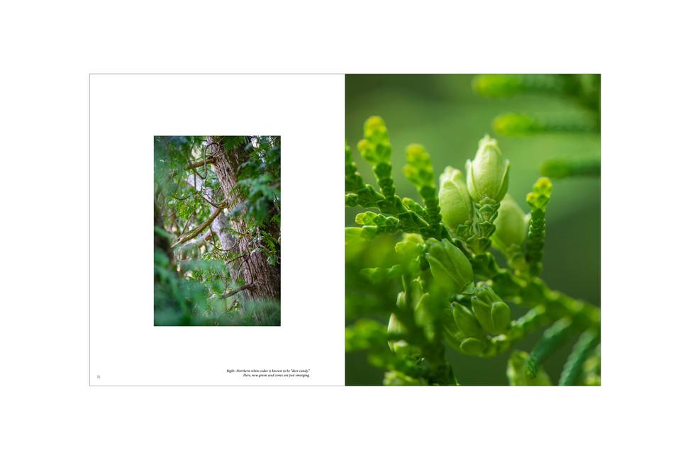 proof1_tweak_approval_21_trees_final_v6g