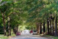 treelined street.jpg