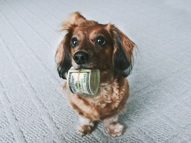 How much is that doggy... gonna cost me?