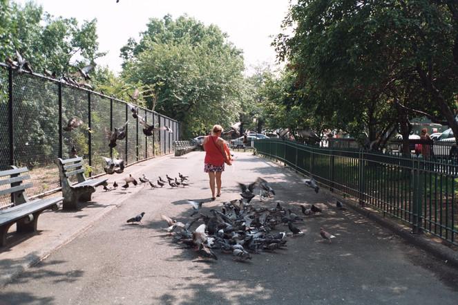 Pigeon Lunch, Williamsburg, NYC, 2018