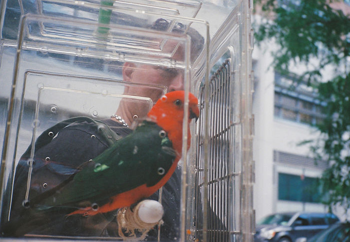 Man Holding a Parrot in a Plastic Box, NYC, 2019