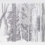 Pine and Trunks
