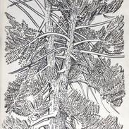 Pandemic Drawing, Bucks County Woods