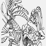 Banana Plant Undergrowth