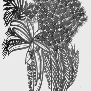Sydney Botanicals