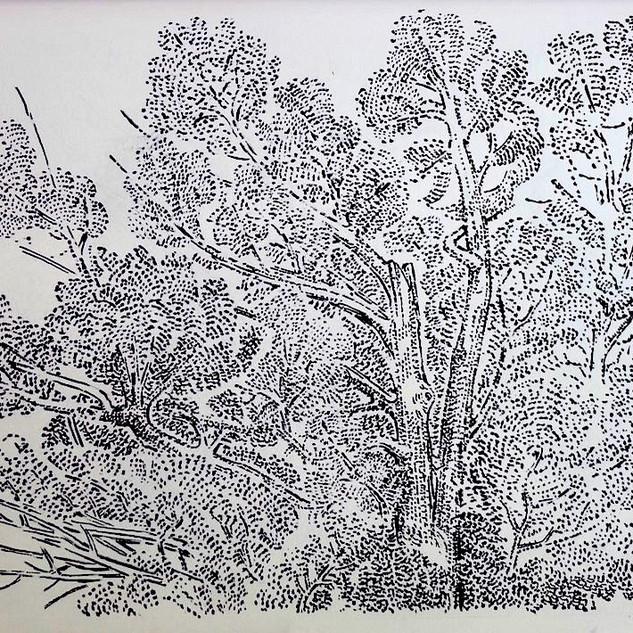 Pandemic Drawings, Bucks County Woods