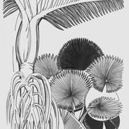 Six Palm Leaves