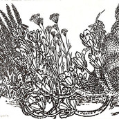 Adelaide Succulent Cluster