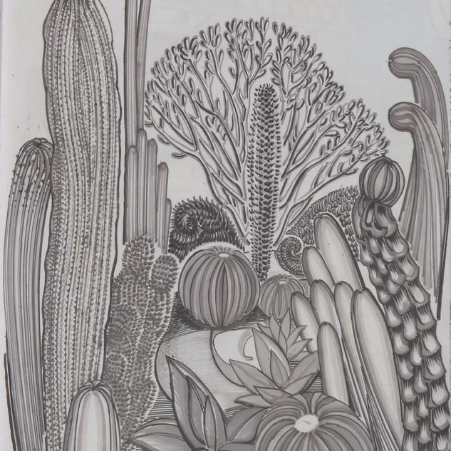 Cactus Garden, Paloma Park