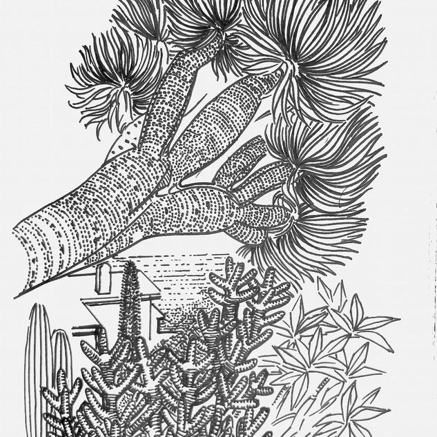 Yucca and Sea