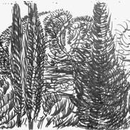 Cypress Breeze