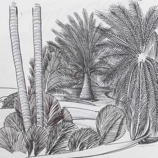 North Coast Palms