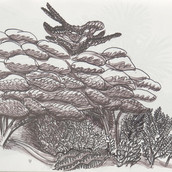 Trees and Thicket