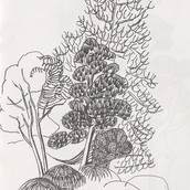 Sydney Bontanical Garden, Pine