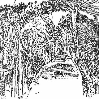 Sydney Botanical Gardens Path